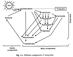 Components Of Ecosystem Flow Chart Ecosystem Its Structure And Functions With Diagram