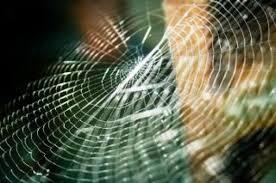 Resultado de imagem para fotos de teias de aranhas