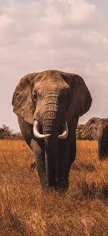 Iphone Elephant Wallpaper Hd - wallpaper