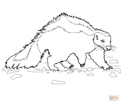 Skunk Coloring Pages Free Coloring Pages