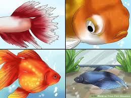 Fish Medication Chart How To Treat Fish Diseases 13 Steps With Pictures Wikihow