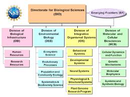 Nsf Org Chart Us Nsf Bio About Biological Sciences Bio