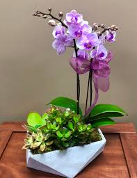 orchids in geo