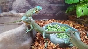 petco animals reptiles. Modren Reptiles Petco Reptiles Inside Petco Animals Reptiles