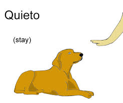 spanish dog mands