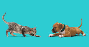 differences between cats and dogs pet hospital®