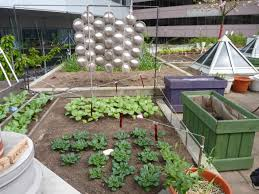Small Picture Metro Vancouver Rooftop Vegetable Build Your Own Home Roof