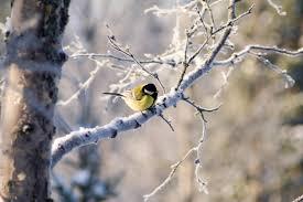 Bilderesultat for bilder av vinter