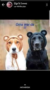 Pin Von Linette Wiebe Auf Sprüche U Zitate Lustige Hund Bilder