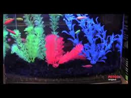 petco glofish.  Petco Petco Pets Tetra GloFish With Glofish R