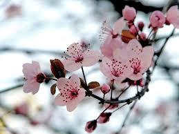 Selección de las flores más bonitas del mundo | Jardineria On