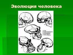 современные люди Презентация по биологии Эволюция человека Презентация по биологии Эволюция человека