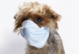 Φθινοπωρινές ιώσεις στον σκύλο...
