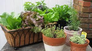 Container Garden Design Custom Decoration