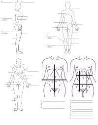 Anatomy And Physiology Body Regions Worksheet - Geoface #9ad723e5578e