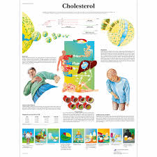 Cholesterol Chart Image Cholesterol Chart