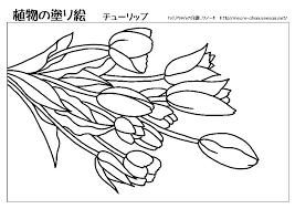 無料塗り絵植物 れくりちゃんの介護レクノートtitlemeta Name