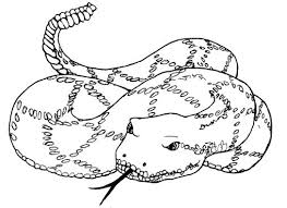 Small Picture Coloring Pages Boa Snake Coloring Pages Hellokids Snake Coloring