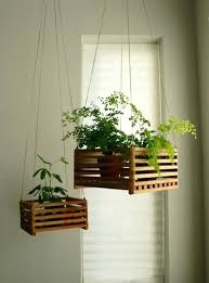 hanging house plants hanging house plants houseplants pictures of baskets  lovely in hanging plants indoors low