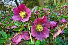 7 perennial flower bed design ideas to