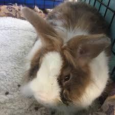 Resume Rabbit Need Help With C Programming Assignment Will DaniWeb Resume 81