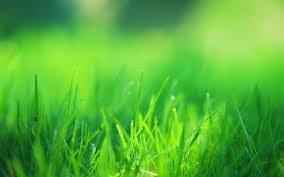 grass field background. Green Grass Field (1600x900 Resolution) Background