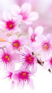 full screen flower wallpaper for mobile