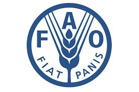 """Résultat de recherche d'images pour """"fao"""""""