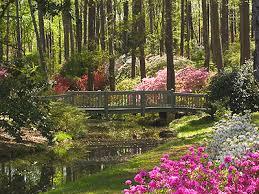 callaway gardens in georgia. callaway gardens, pine mountain,ga.there is nothing more beautiful than the azalea gardens in georgia