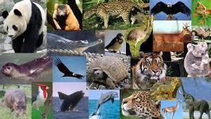 Animales en peligro de extinción- Poblaciones Naturales- Especie — Steemit