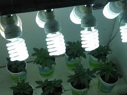 Homemade Cfl Grow Light Fixture Cannabis Gold The Best Use Of Marijuana Grow Lights