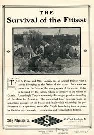 science technology and society ix malthus darwin and social release flier for the survival of the fittest 1911