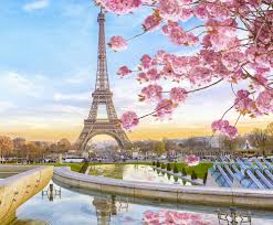 eiffel tower cherry blossom