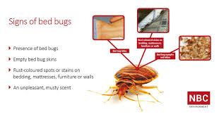 signs of bed bugs nbc residential