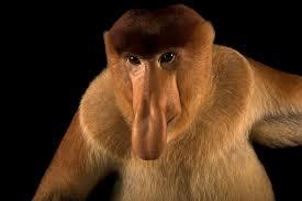 real jungle animals monkeys. Perfect Animals Throughout Real Jungle Animals Monkeys
