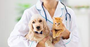 Petcard's veterinary financing programs ensure that you don't delay the treatment your pet needs due to cost concerns by offering you a variety of financing terms with convenient monthly payments. 9 Best Credit Cards For Pet Owners Expenses 2021
