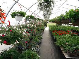 moe s gardens greenhouse opening hours po box 6556 stn main bonnyville ab