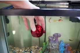 bright and modern fish tank decorations aquarium decorate ideas wishforpets with fish tank decorations