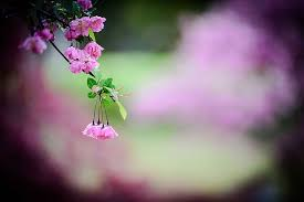 hd wallpaper spring flowers flower