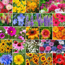 burst of bloom annual perennial wildflower seed mix quick view