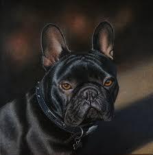 french bulldog oil on canvas by stephenainsworth