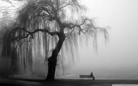 Image result for willow tree gray