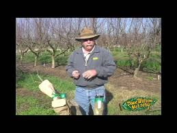 How To Grow Dragon Fruit  Growing Dragon Fruit PitayaHow To Graph A Fruit Tree