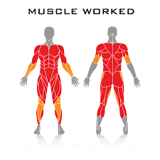 as you can see in the image the three pound bodyweight workouts cover all the primary muscles used