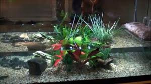 Turtle Tank Decor New 120 Gallon Turtle Tank Setup How To Youtube