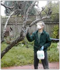 What Time Of Year Do You Plant Fruit Trees  Home Guides  SF GateDormant Fruit Trees