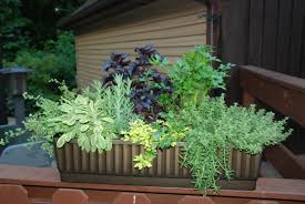 Small Picture Patio Gardening Containers Home Design Ideas and Pictures
