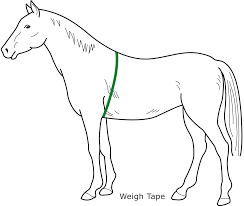 A Basic Guide To Feeding Your Horse Allen Page Horse Feed
