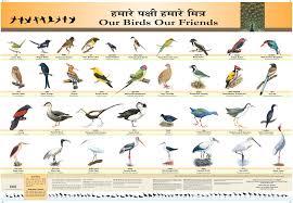 Bird Beak Chart Bird Chart Centre For Environment Education Cee