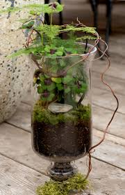 Glass Urn Terrarium